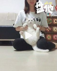 Jokes Videos, Funny Cat Videos, Funny Memes, Funny Humour, Hilarious, Cute Kitten Gif, Kittens Cutest, Cute Cats, Funny Cats And Dogs