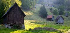 Wandern im Nordschwarzwald: Auf den Pfaden der Rothirsche