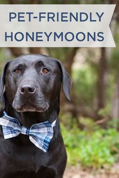 Bring your 4-legged pal along for the ride with these pet friendly honeymoons!