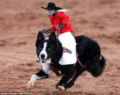 I am one mean Hombre...     Whiplash the Cowboy Monkey was the true star of this year