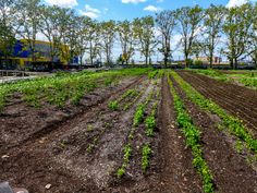 Visit or volunteer at the Red Hook Community Farm, Brooklyn, New York Stuff To Do, Things To Do, Red Hook, Close To Home, Railroad Tracks, New York City, Brooklyn, Community, Plants