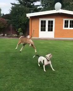 Playing two dogs - Dogs - small and tall - Tiere Funny Animal Videos, Cute Funny Animals, Funny Animal Pictures, Cute Baby Animals, Funny Dogs, Animals And Pets, Videos Funny, Dog Videos, Wild Animals