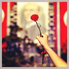 #occupygezi #freeturkey #taksim Dandelion, Flowers, Plants, Dandelions, Florals, Planters, Flower, Blossoms, Plant