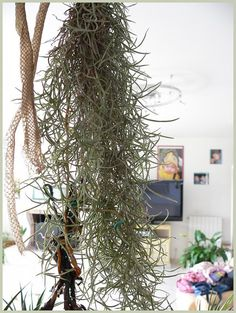 Mudpuppy Air Plant Pod | Daily Delights | Pinterest | Air Plants, Plants  And Gardens