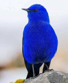 Name this beautiful bird 😍 Photo by Exotic Birds, Colorful Birds, Exotic Pets, Exotic Animals, Beautiful Creatures, Animals Beautiful, Cute Animals, Cute Birds, Pretty Birds