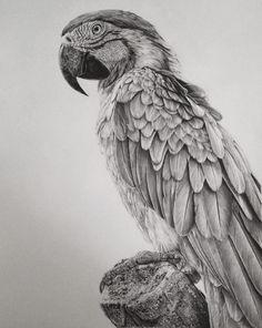 Monica Lee drawings