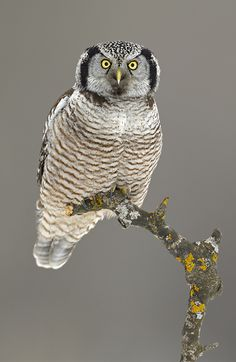 Never thought Owls could be this beautiful!