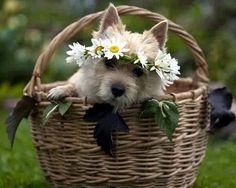 Creio que os animais são uns anjos que podem nos ensinar o que é fidelidade.♥ ______Wal Águia