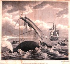 """Whale throws boat of whalers. Image from """"An Account of the Arctic regions with a history and description of the northern whale-fishery"""" W. Scoresby, 1820)"""