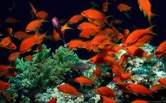 Explore Coral Treasures of #Maldives with Travelhot.