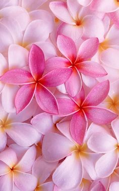 Find tattoo inspiration in nature. These Pink Plumerias are a beautiful in color. [p-ink.org]