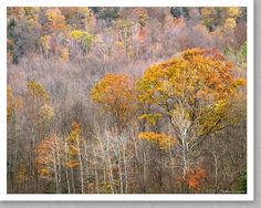 Late Autumn Forest, Green Mountains, Vermont