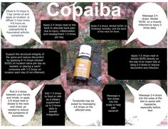 Copaiba Young Living Essential Oils Pain Dandruff Bronchitis Insect Bites Headache Tendonitis Indigestion