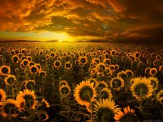 Sunflower Fields 22 Reasons Why You Should Visit Romania Beautiful Sunset, Beautiful Places, Amazing Places, Visit Romania, Romania Travel, The Evil Within, Sunflower Fields, All Nature, Depth Of Field