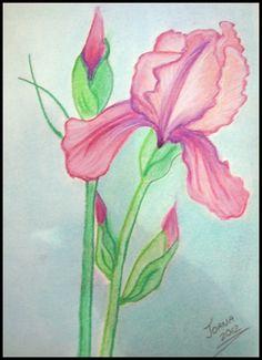 IRIS  Dibujo a pastel en papel de tamaño DIN A 4