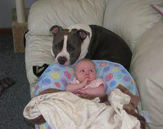 Baby & Pit Bull