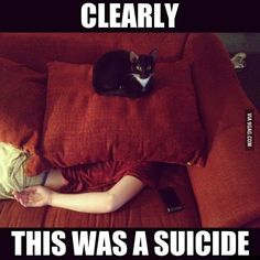 its about a cat, he is sitting on the pillow where the boy died from, clearly this was a suicide