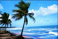 Camaçari (BA) - Praia de Arembepe  Foto: Christian Knepper  http://italianobrasileiro.blogspot.com/