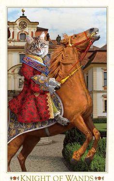 Baroque Bohemian Cats