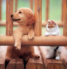 Who says dogs and cats can't be friends? Here are 8 dog breeds that love cats!