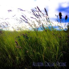 See this Instagram photo by @allison_picone_photos • 1 like
