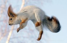 {squirrel!} of the leaping Russian variety :)