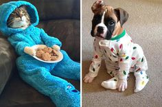 21 Cats And Dogs Who Are So Ready For Bedtime