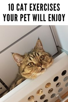 Cute Baby Cats, Kittens Cutest, Cats And Kittens, Healthy Pets, Stay Healthy, Indoor Cats, Cat Exercise, Cat Activity, Newborn Kittens