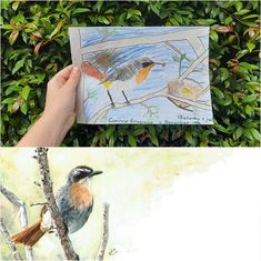 I can still remember drawing this Cape Robin-Chat (I was nine!). Right towards the end, I accidentally caused a big smudged just above the bird's back, and decided to cover it up with that shockingly awful sun...!  🌿 Read my latest blog post, where I share some more of my childhood drawings along with their grown-up friends. #memories #wildlifeart www.thehappystrugglingartist.co.za Sitting Cross Legged, Bird Guides, Ugly Duckling, Nature Study, Modern Artwork, Wildlife Art, My Childhood, Being Ugly, Robin