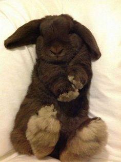 Adorable bunny!! #Lookatthosefeet!!!!!!!!!! #Awwwww!!!!!!!!!!
