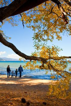 Fall colors in Lake Tahoe, California | The Best Fall Foliage Drives in Northern California & Oregon. Here are 5 great spots for autumn leaf peeping or a fall colors getaway. Pin this post to save it for fall travel inspiration or planning your autumn leaves trip!