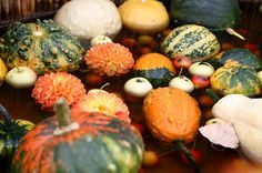 Maya-Honey Lampwork: Autumn splendor, pumpkins