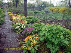 Gourmetkaters Garten: Hurra! Regen! #garden #gardening #garten
