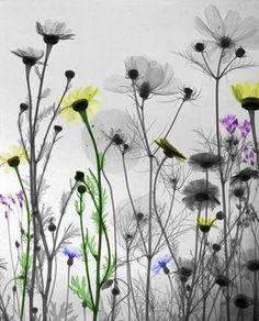Fotografias da natureza feitas com RAIO-X por Arie Van't Riet | MISTURA URBANA