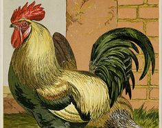 """Matted Antique Chicken Print C.1887  Harrison Weir Chromolithograph Rooster and Hen  11x14"""" Vintage Decor"""