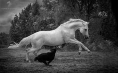 Horse and dog by Victoriya Bondarenko on 500px