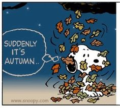 Suddenly it's Autumn (Snoopy) Peanuts Cartoon, Peanuts Snoopy, Schulz Peanuts, Snoopy Cartoon, Peanuts Comics, Snoopy Love, Snoopy And Woodstock, Joe Cool, Charlie Brown And Snoopy