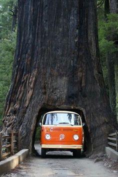 VW van thru a tree