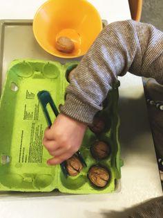 Het pakken van walnoten met grote plastic pincet tbv de pincetgreep. (Fijne motoriek)