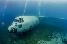 C 130, Abandoned Ships, Abandoned Cars, Abandoned Vehicles, Military Jets, Military Aircraft, C130 Hercules, Sea Diving, Deep Blue Sea