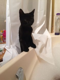 10 things that are near impossible to do when you have 2 crazy kittens.Number a bath! Tuxedo Kitten, Number 2, Crazy Cats, Kittens, Bath, Cute Kittens, Baby Cats, Kitty Cats, Bathrooms