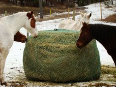 diy hay net extra 3 weeks from the bail now! Horse Slow Feeder, Hay Feeder For Horses, Horse Hay, Horse Barns, Diy Hay Feeder, Round Bale Feeder, Horse Shelter, Barrel Racing Horses, All About Horses