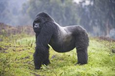 Come for the mountain gorillas, stay for the food and cafe scene.