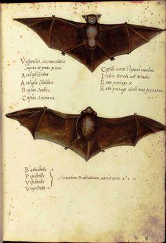 Printables Seasonal – Fall – Bats, black cats, witches