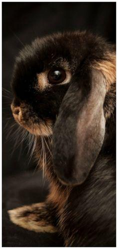 Die 602 besten Bilder von Tiere   Cutest animals, Adorable animals ... f392056dd8