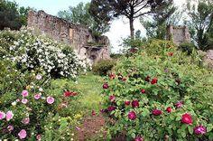 GIARDINO DI NINFA Cisterna di Latina LT  #TuscanyAgriturismoGiratola