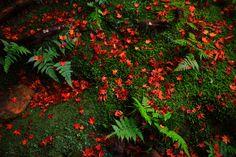 鮮やかな紅葉の散ったシダや石