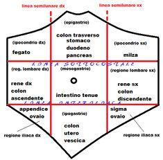 Anatomia della parete addominale   FertilityCenter