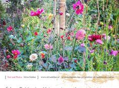Silvia Dekker, designer di giardini, idee per imparare a progettare da soli Plants, Blog, Blogging, Plant, Planets