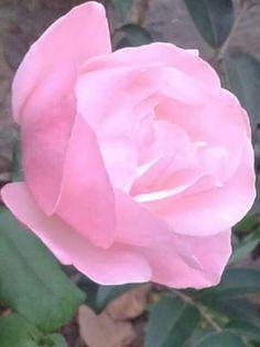 Flor-22